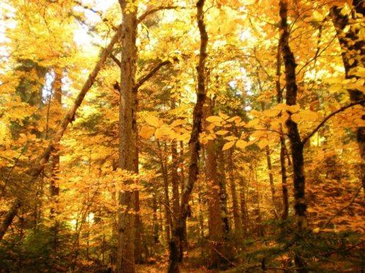 Архыз, гостиница Кордон 09 природа прекрасна осенью