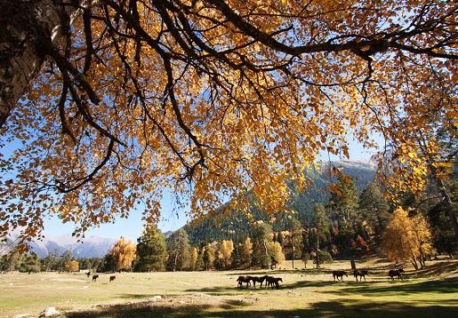 Фото Архыза осенью