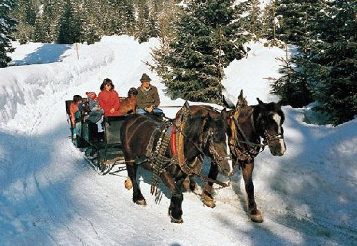 На Новый год 2016 в Архызе можно покататься на лошадях